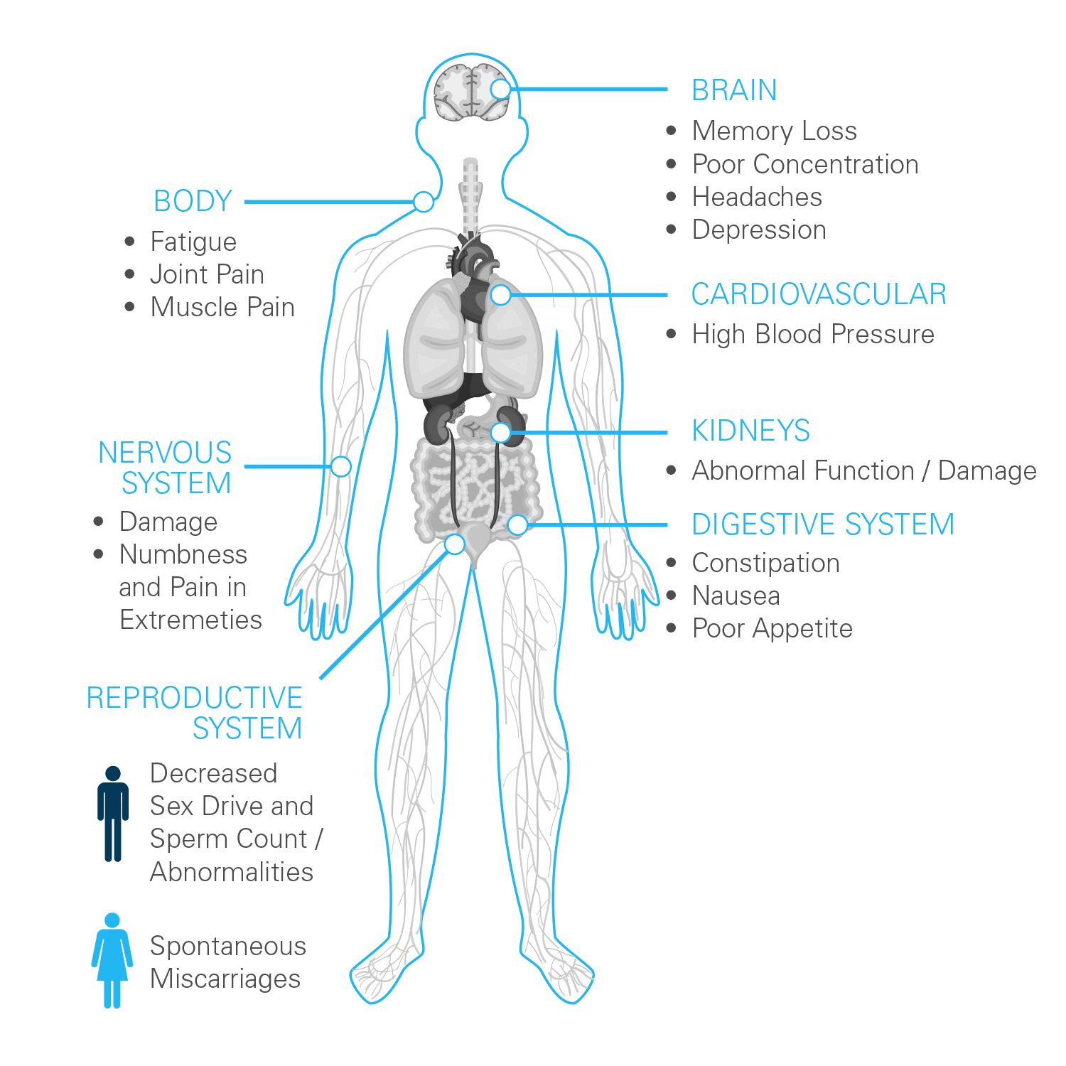 effects of lead on an adult diagram